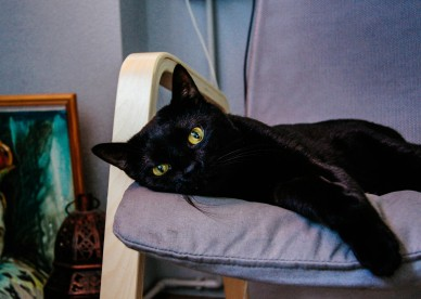 pictures of black cats